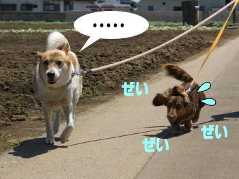 katsu-kai7.jpg