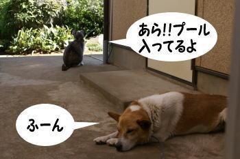 katsu-mozuku10.jpg