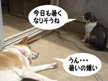 katsu-mozuku8.jpg