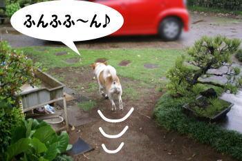 katsu48.jpg