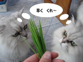 momoko-magu.jpg