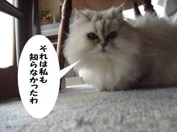 momoko1.jpg