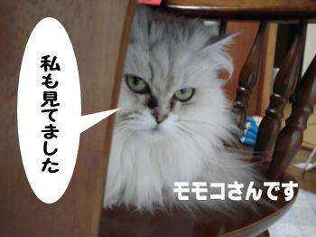 momoko2.jpg