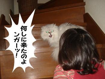 momoko3.jpg