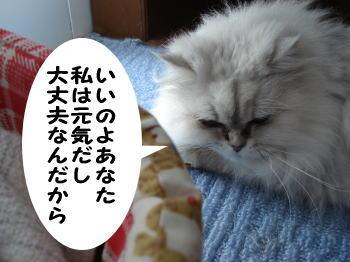 momoko6.jpg