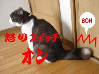 mozuku4.jpg