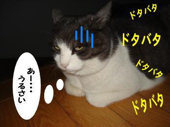 mozuku5.jpg