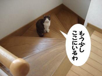 mozuku66.jpg