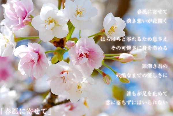 utu_sakura9.jpg