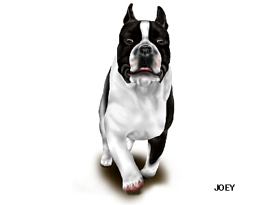 JOEY17-2.jpg