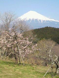富士山と桃