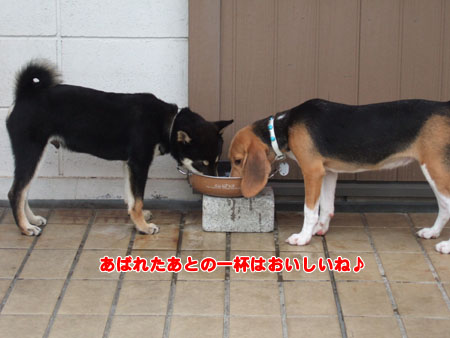 しつけ教室(2006/9/16)