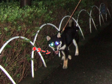 夜の散歩(2006/9/18)