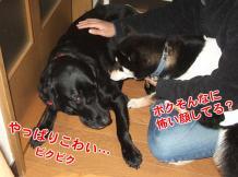 ひまちゃんと初対面(2006/11/19)