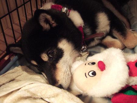 初めてのクリスマス(2006/12/25)