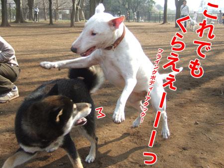 ドッグランにて(2007/3/4)