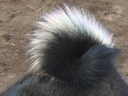 ぶん太の尻尾(2007/3/4)