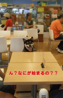 ぶん太、初めての外食(2007/6/17)