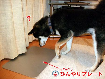 ひんやりプレート(2007/7/4)