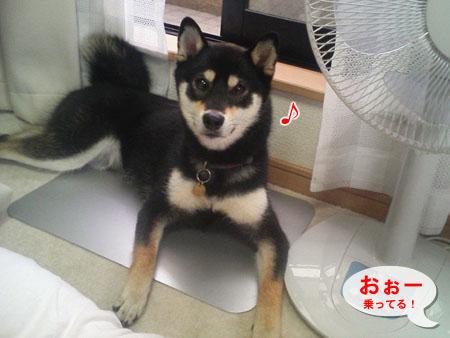 ひんやりプレート(2007/7/13)