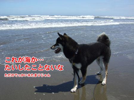 はじめての海(2007/7/16)