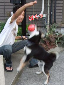 お祭りの日(2007/7/27)