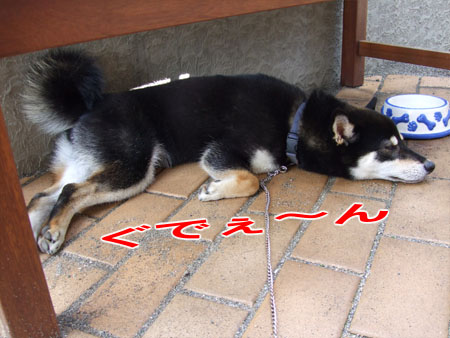 続 ひんやりプレート(2007/8/2)