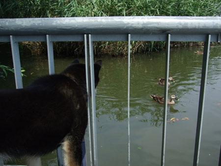 井の頭公園(2007/8/4)