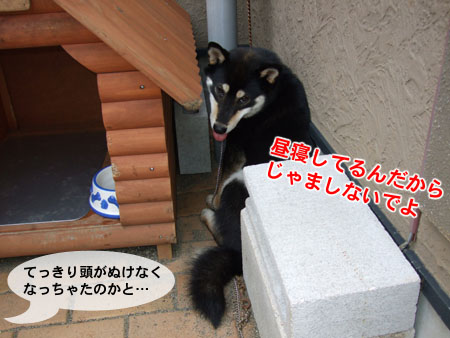 頭がぬけない!?(2007/8/6)
