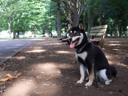 神代植物公園(2007/8/17)