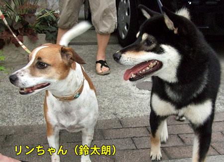 リンちゃん来訪(2007/8/29)