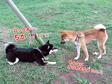 夕方の公園(2007/9/3)