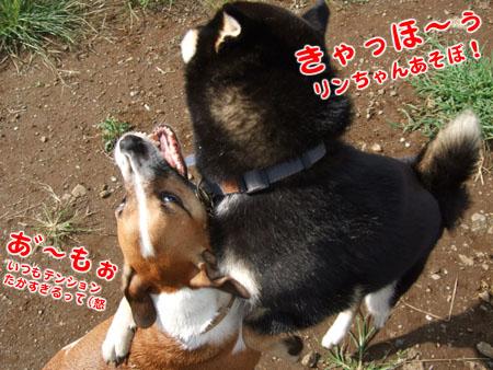 元祖ここほれワンワン(2007/9/15)