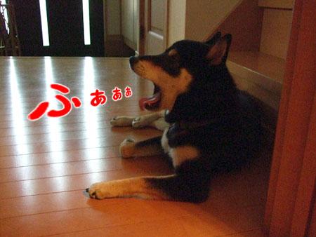 朝顔より早く(2007/9/20)