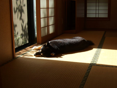梅に鶯、和室に柴犬(2007/10/2)