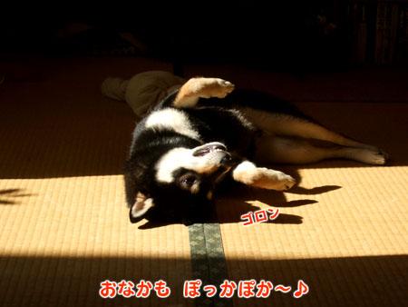 ぶん太のうた(2007/10/18)
