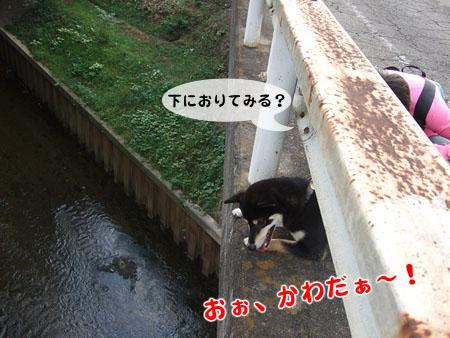 ピンクのお姉さん(2007/10/20)