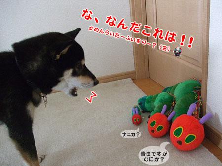 はらぺこあおむし(2007/11/9)
