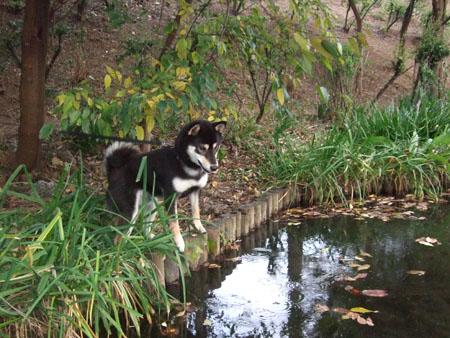 池のある公園(2007/11/17)
