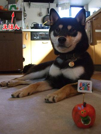 続 はらぺこあおむし(2007/11/22)