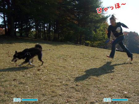 犬の体力は無尽蔵(2007/11/25)
