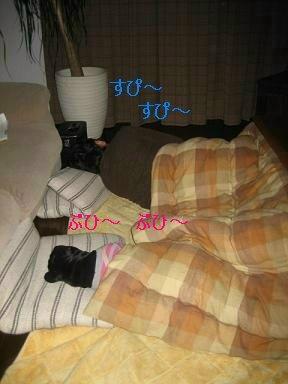 IMG_0558_sh01.jpg