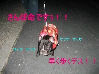 IMG_0599_sh01.jpg