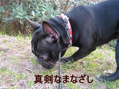 IMG_0661_sh01.jpg