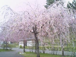 滝沢総合公園1