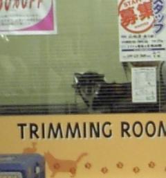ペット美容室1