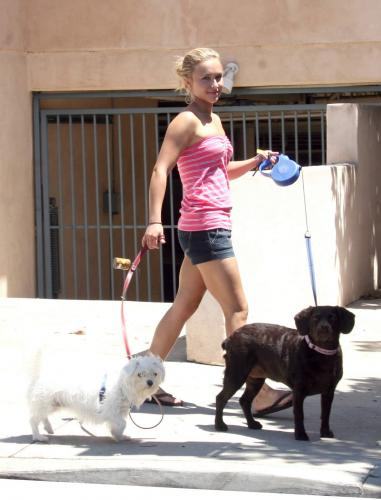 hayden-panettiere-walking-dogs-08.jpg