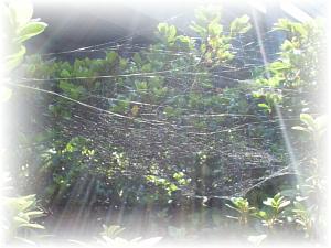 空とくもの巣と光