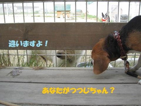 004_20110503085540.jpg