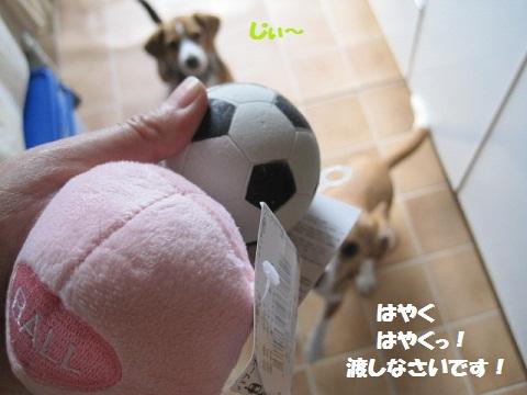 021_20110511091819.jpg